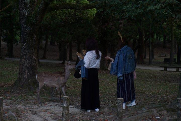 Ciervos y turistas que quieren ser una más, dándoles las famosas galletitas de arroz que hay a la venta.