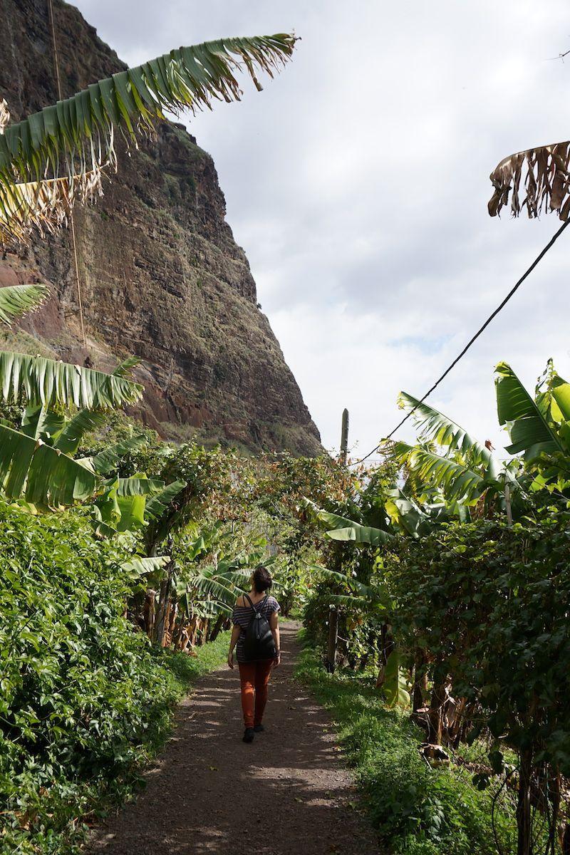 El camino hacia el restaurante, entre acantilados, huertos y plátanos, en Fajã dos Padres