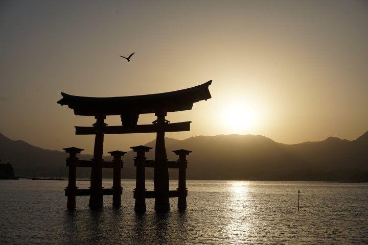 Contemplar la despedida del sol en la isla de #miyajima ha sido de las experiencias más mágicas que vivimos juntxs estos días por #japón. ⛩ Además, no nos acompañaba mucha gente al atardecer ya que pocas personas se quedan por la isla después de las 17h y pico, hora en que cierran todos los comercios de la isla (excepto un par de restaurantes para quién se quede a dormir por allí). Más que de gente, tuvimos la compañía de varios ciervos que pasaban por allí a ver que se cocía y nos olisqueaban las mochilas a ver si teníamos algo comestible dentro... Tuvimos también la compañía de algún que otro cuervo (están por todas partes en Japón), como este que muy amablemente decidió posturear para nuestra foto antes de descansar encima del Torii. ⛩