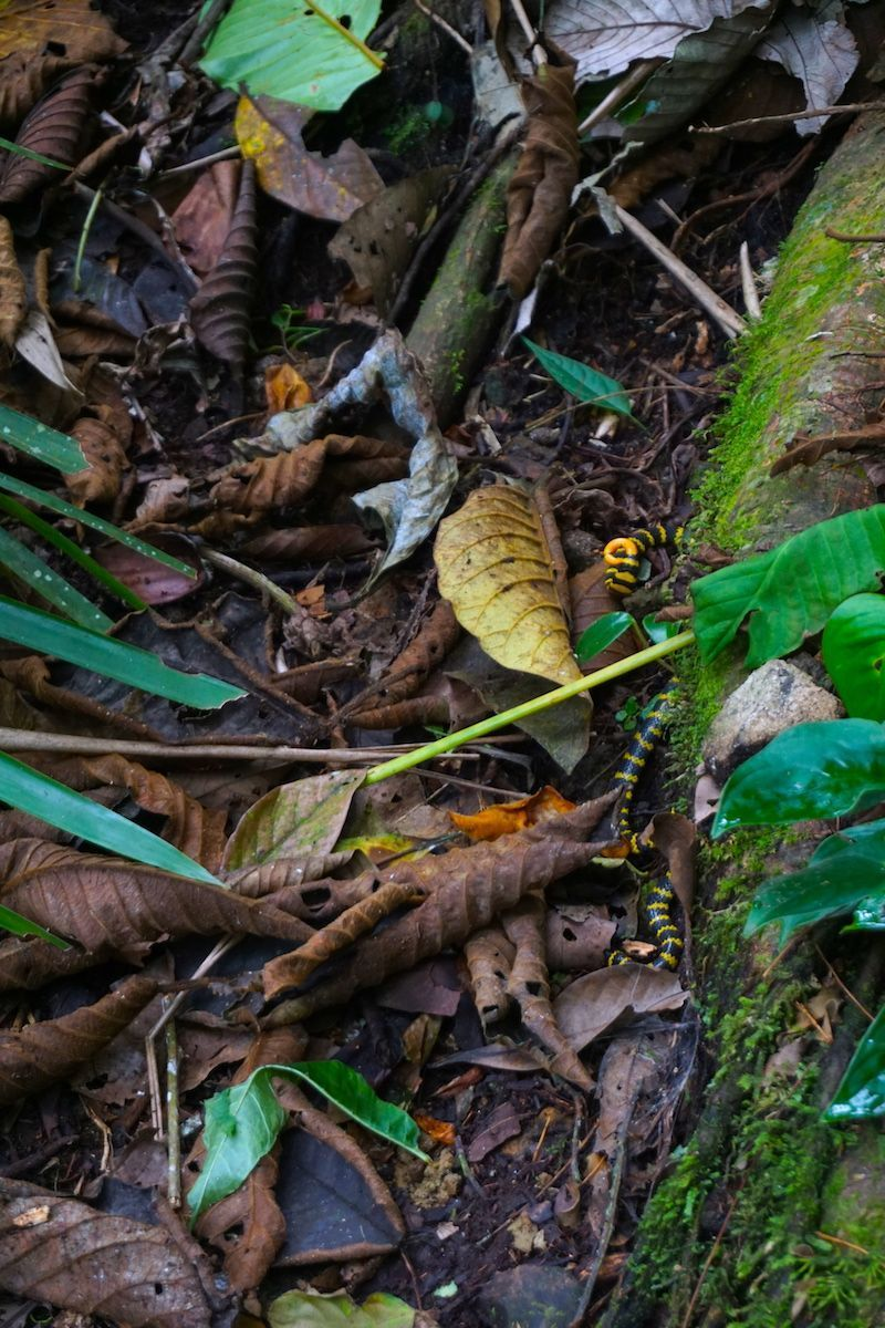 La serpiente de coral que nos dio un buen susto, en el barbas Bremen
