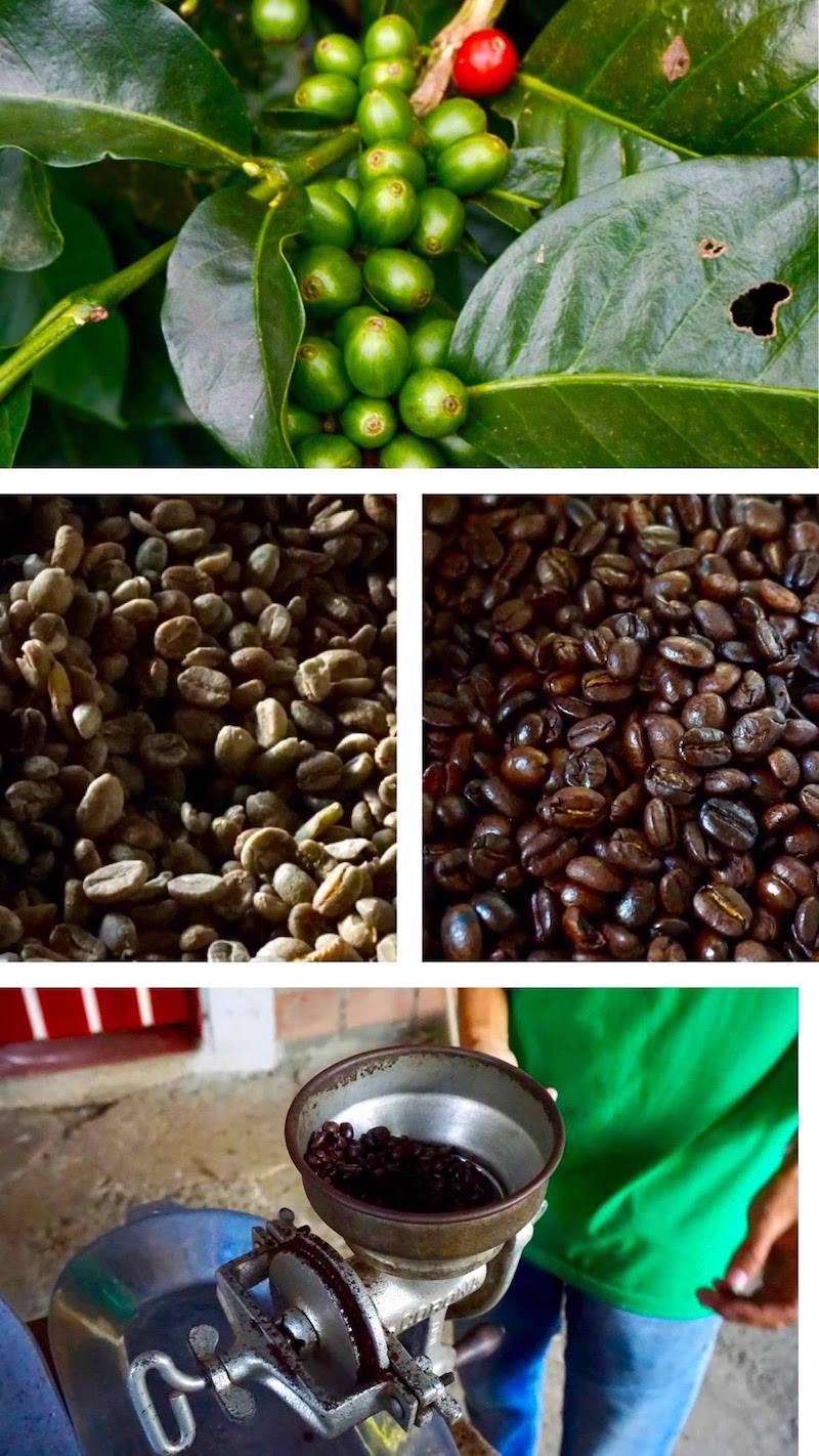 El proceso completo de la producción de café que nos explicó Alejandro, en la Finca Don Elias