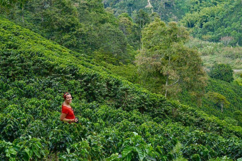 Las plantaciones de café de la hacienda