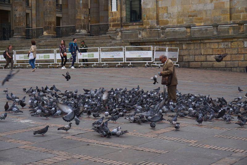 Un señor alimentando las palomas residentes de la plaza
